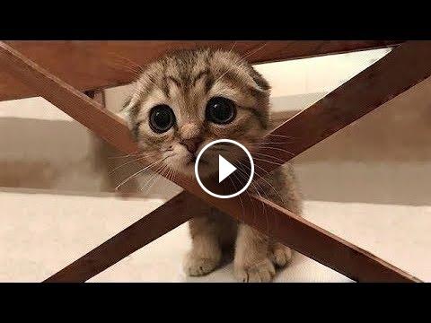 Gatti Pazzi Gatti Divertenti Prova A Non Ridere Funnycatsfunny