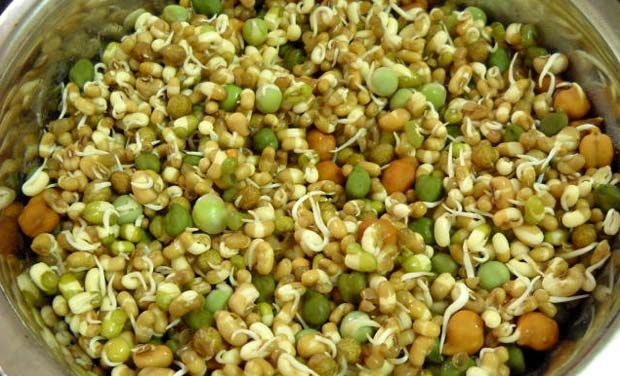 Image result for fibre rich sprouts