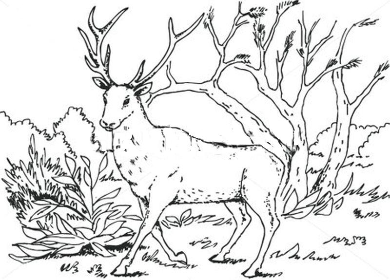 Set 10 Planse De Colorat Cu Animale De Padure Fise De Lucru
