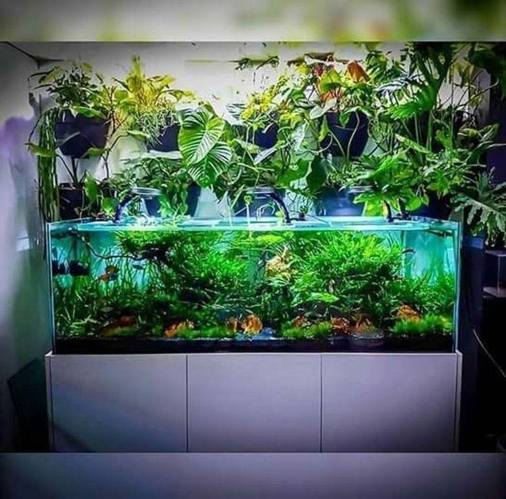 Erstaunliche Aquarium Design Ideen Innendekoration 21 In 2020