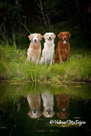 Shades Of Gold Dogs And Kids Cute Dogs Animal Companions