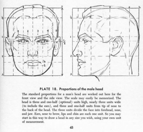 Proportions-of-a-male-head-by-Andrew-Loomis.jpg 571×528 pixels ...