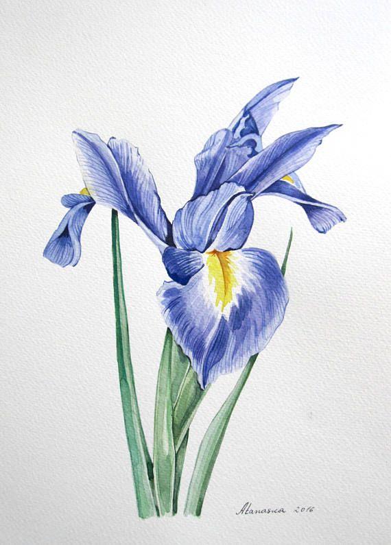 Iris Watercolor Print Flower Print Blue Iris Watercolor Etsy Iris Painting Flower Drawing Flower Painting