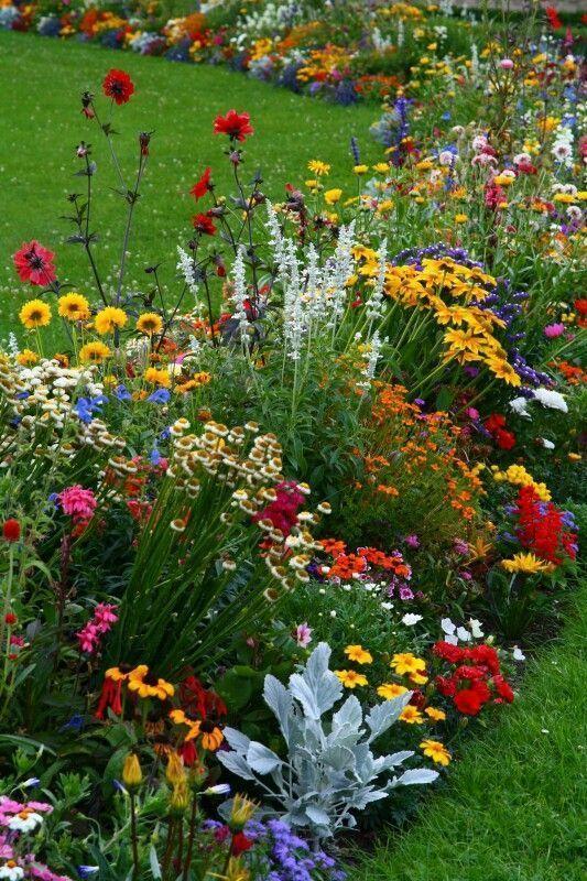 Sie fühlen sich lebendig, wenn Sie nur ihre Schönheit und Farbe betrachten #gartenlandschaftsbau
