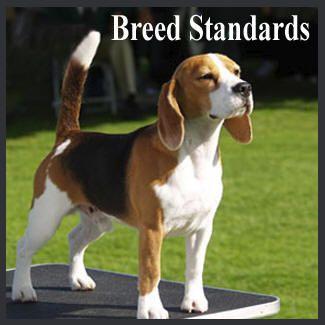 Beagle Breed Standard Beagle Breeds Beagle Buddies Beagle