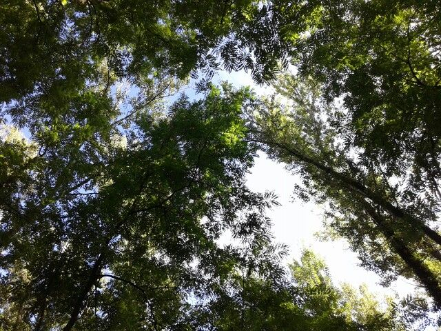 #Trees and #sky.