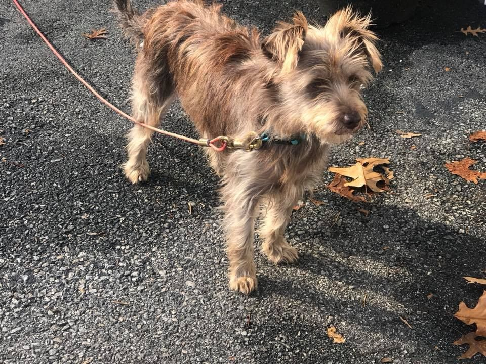 Adopt Gracie ON HOLD on Terrier mix, Dog adoption, Dogs