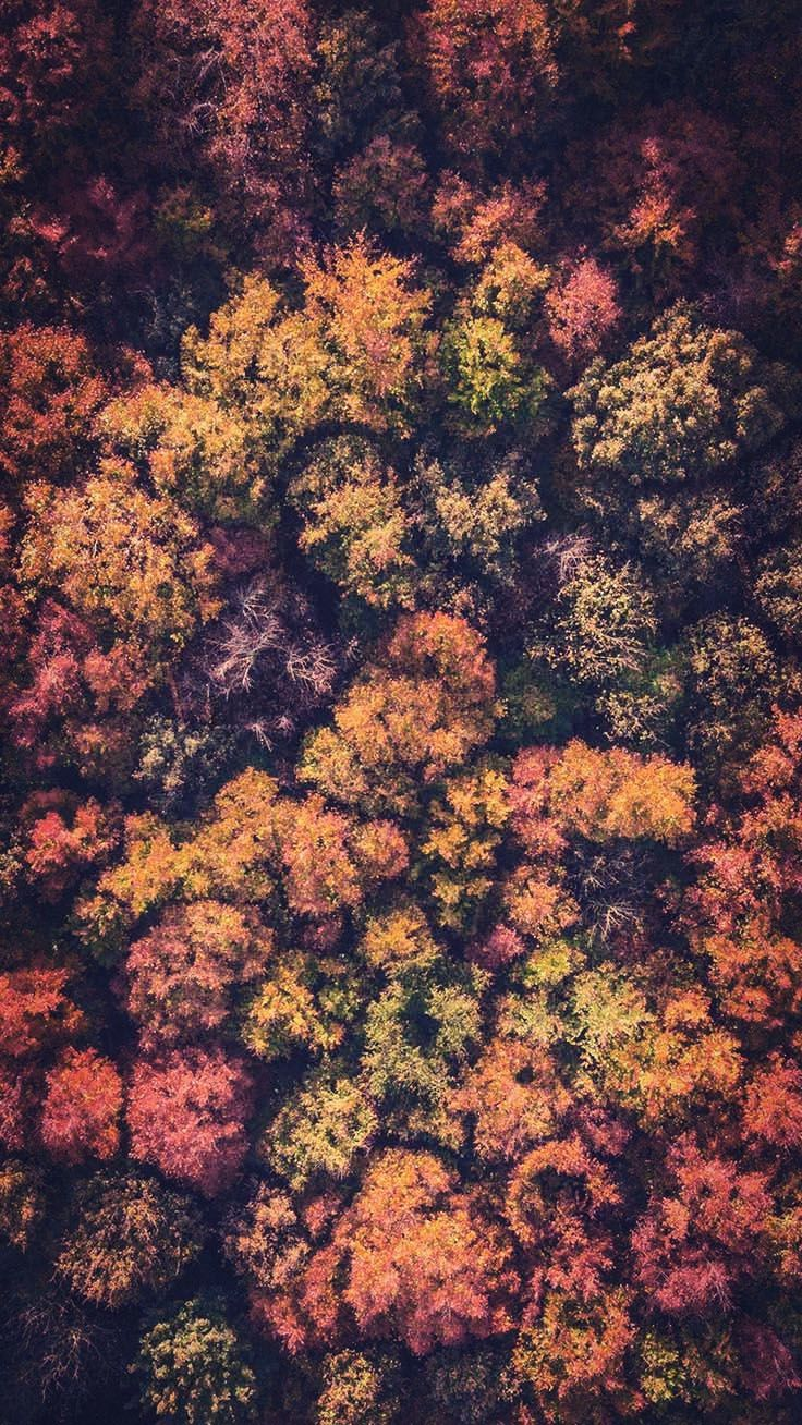 15 Gorgeous Happy Fall iPhone X Wallpapers