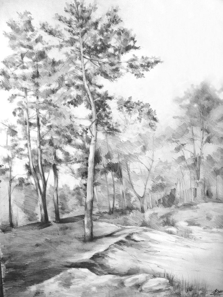 Coloring For Adults Kleuren Voor Volwassenen Landscape Drawings Nature Art Drawings Landscape Pencil Drawings