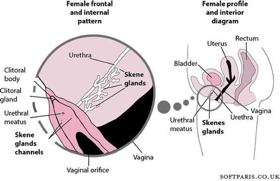 how to squirt diagram free ebony photo