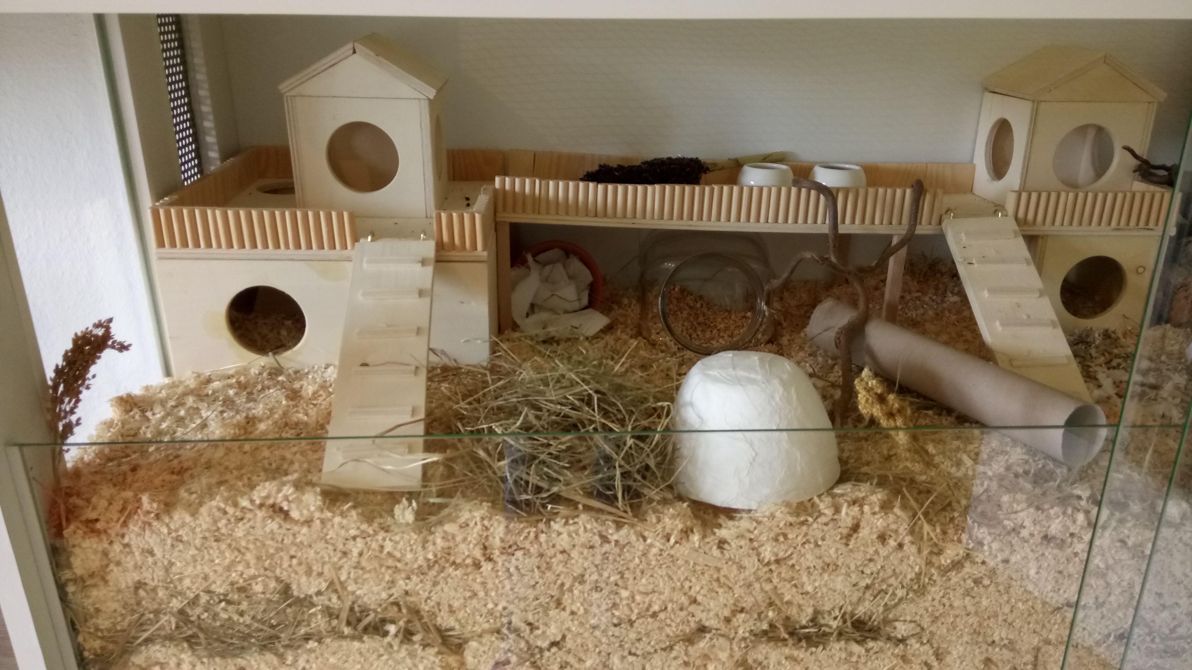 hamster eigenbau nagarium einrichtung dreikammer haus und. Black Bedroom Furniture Sets. Home Design Ideas