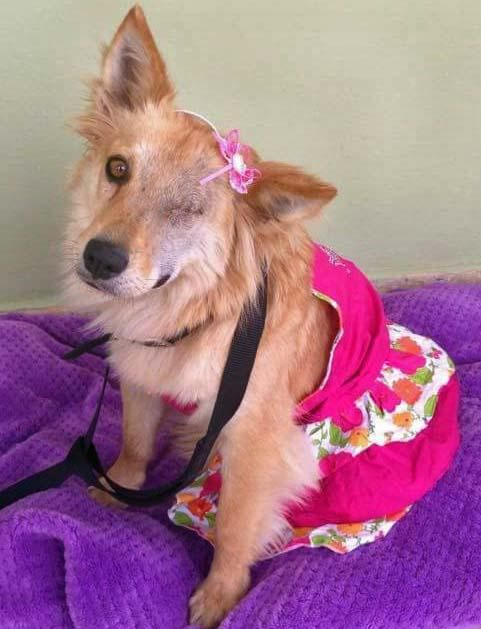 Adopt Betty On Dog Adoption Animals Friends Cute Animals