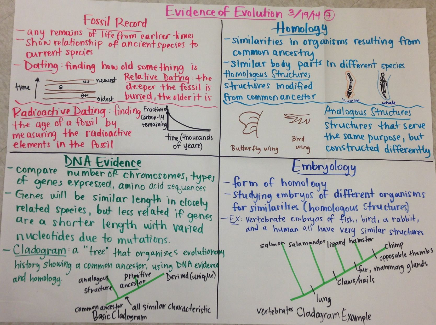 What idea did hardy and weinberg disprove - Evidence Of Evolution Biology Glad Anchor Chart