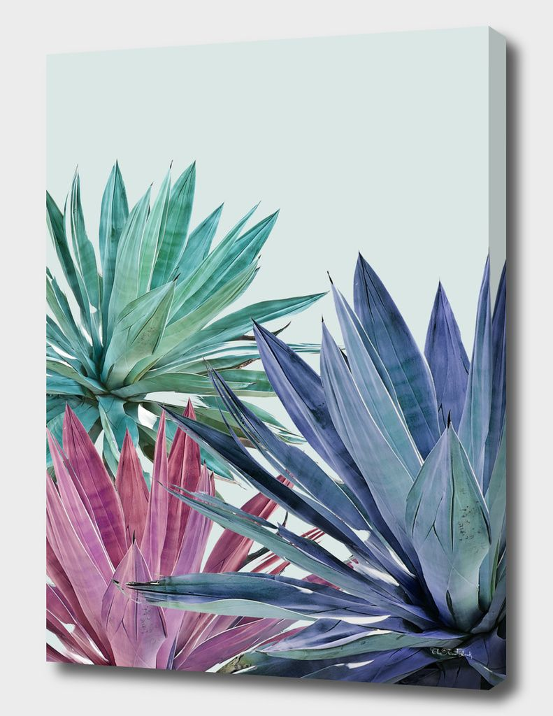 Agave Canvas Print By Caterina Lo Cicero Exclusive Edition From 59 Curioos In 2020 Circular Canvas Painting Small Canvas Art Painting Art Projects