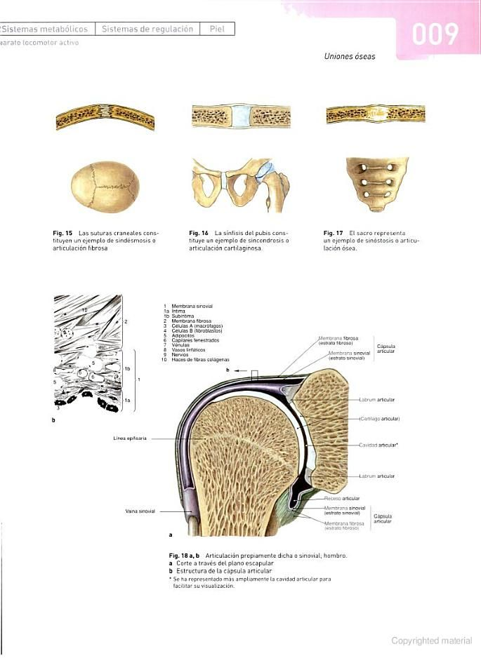 Atlas de anatomía humana: Cabeza, cuello, miembro superior. Vol. 1 ...