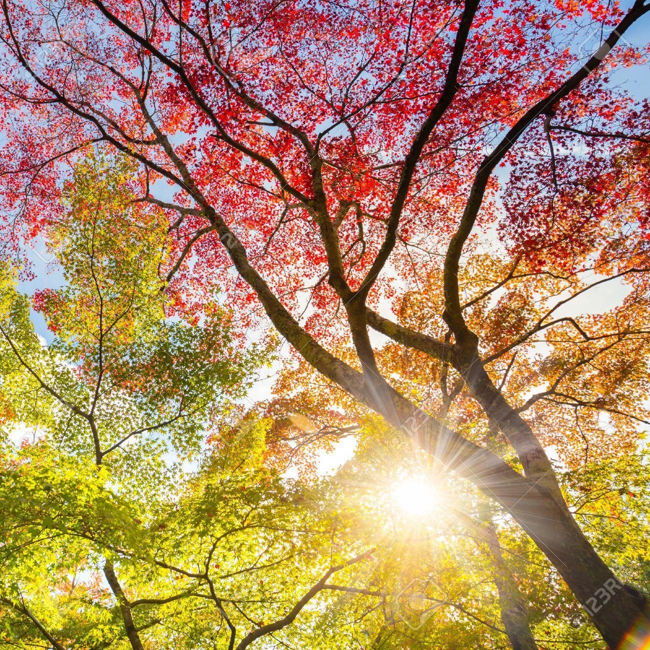 Autumniscoming Solar September Solarpanels Solarenergy