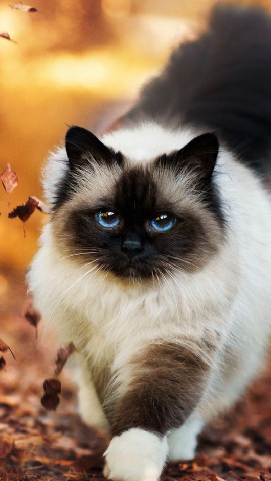 Will All This Beauty Never End Nope Not While There Are Cats Around Pretty Cats Beautiful Cats Cute Cats
