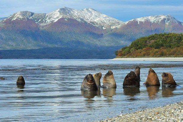 lobos marinos , canales australes, Tierra del Fuego.