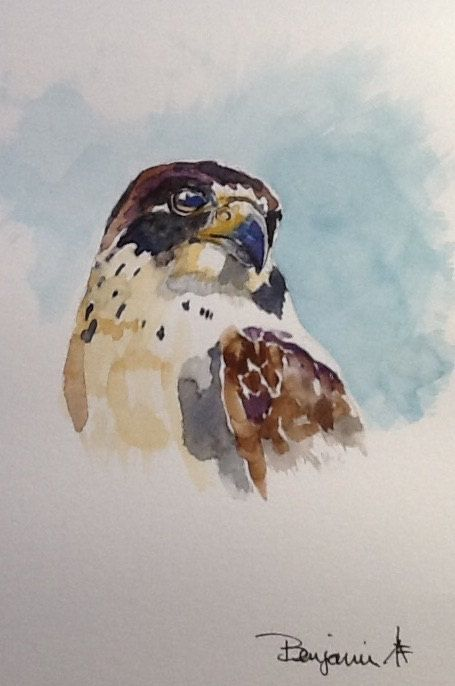 Original Watercolour Painting Peregrine Falcon By Benjaminart9