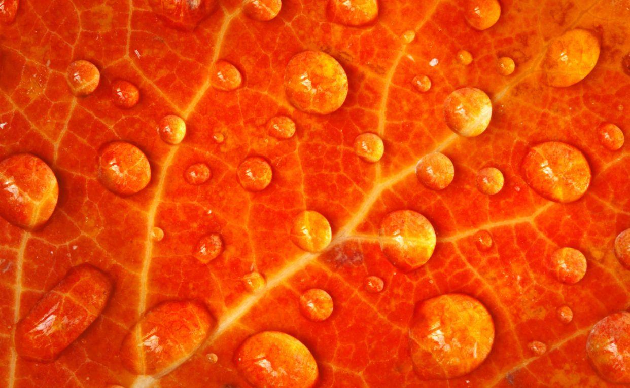 Pin By Candice May Martin On Orange Naranja Orange Wallpaper Orange Background Orange