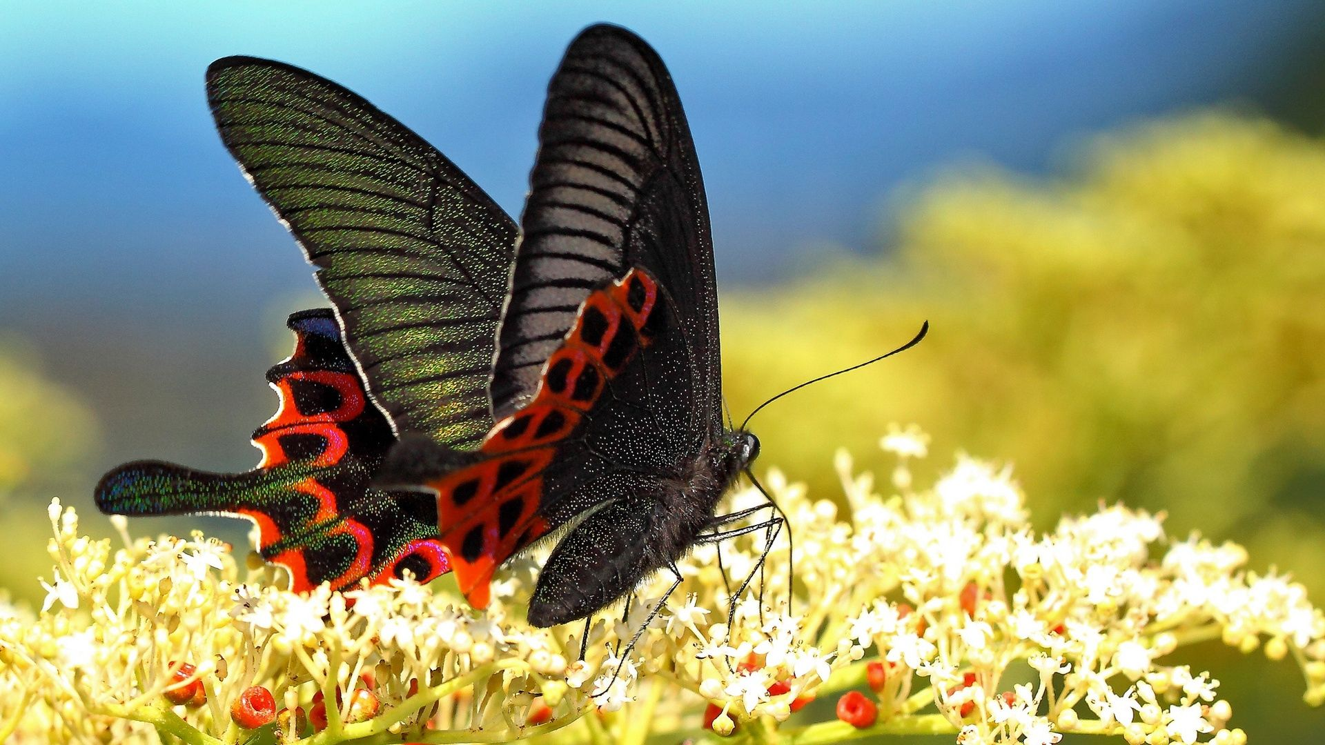 Download Wallpaper 1920x1080 butterfly, grass, pattern ...