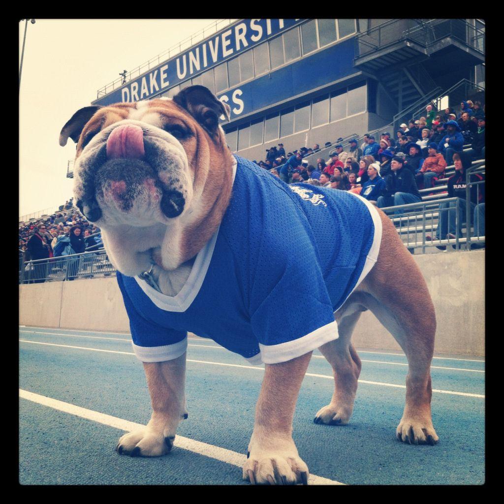 Pin by Drake University on Photo of the Day Bulldog