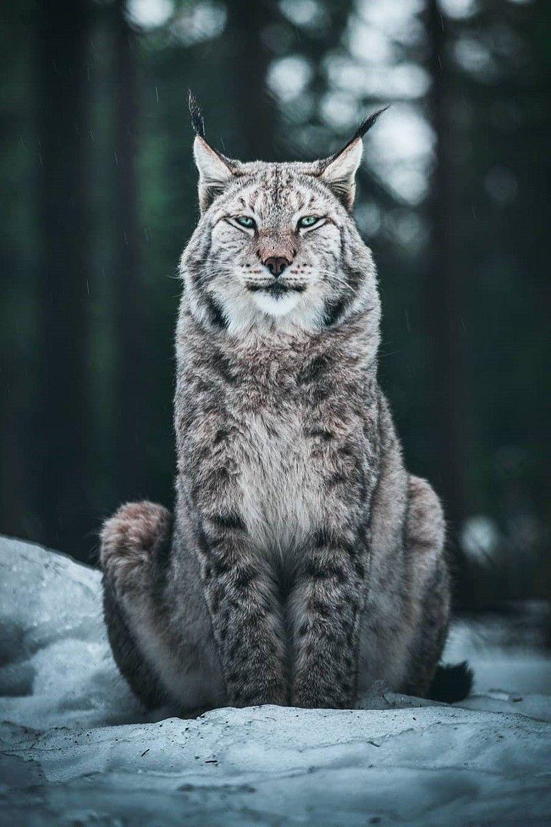 Cat In 2020 Coole Tiere Ausgestopftes Tier Tiere