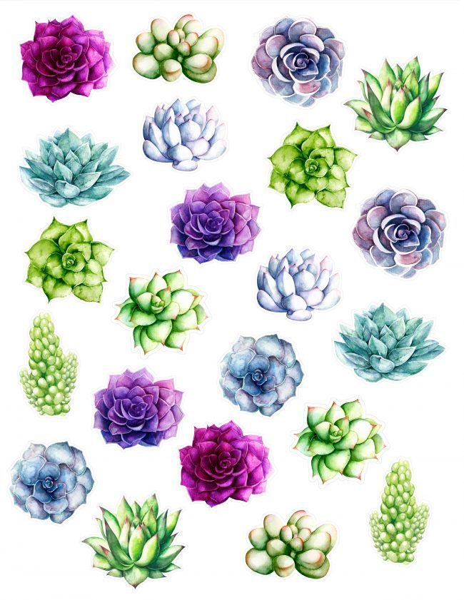 Succulent Sticker Printable Succulents Drawing Watercolor
