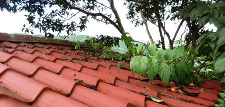 Trim Any Vegetation That S Touching Your Roof Houses In Costa Rica Construction Remodeling Roof