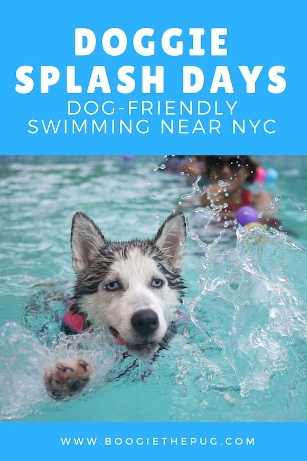 Doggie Splash Days Dog Friendly Swimming Near Nyc Dog Friends Dog Training Dog Care