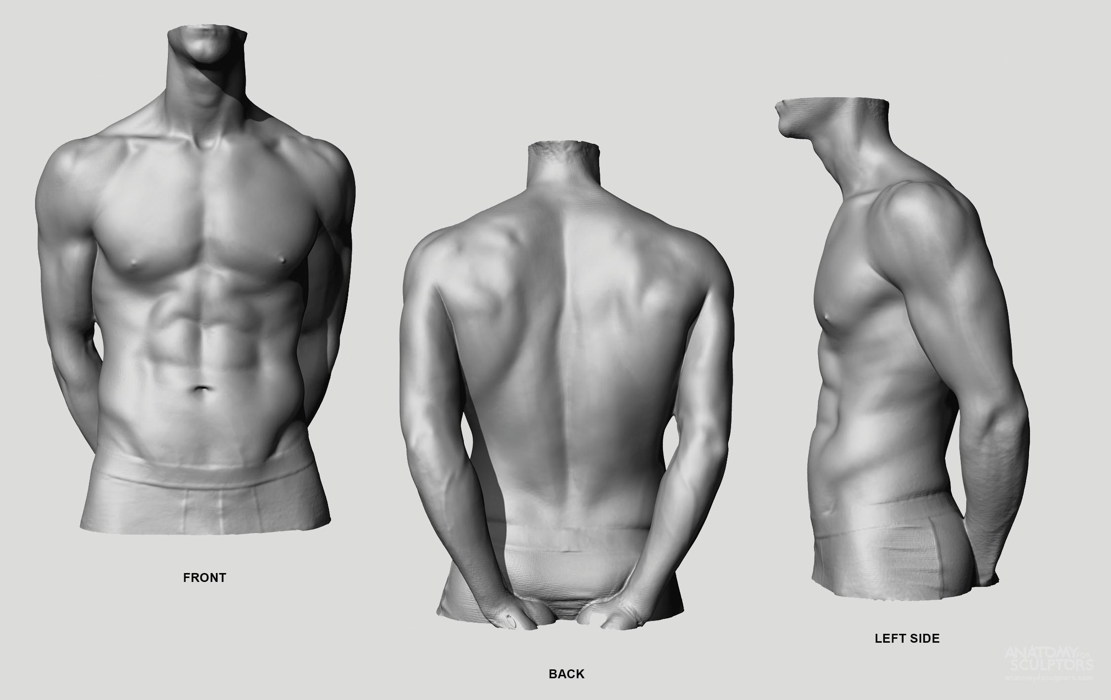 Pin By Art Guy On Anatomy Pinterest Anatomy Anatomy Reference