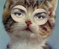 sassy cat part deux!