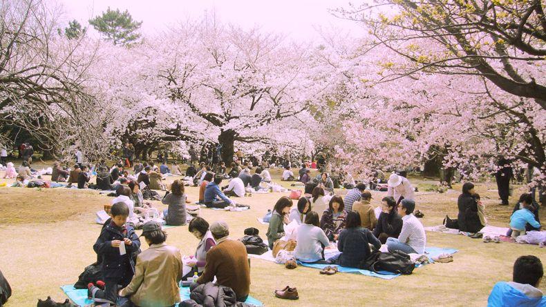 Tokyo S Top Family Friendly Hanami Spots