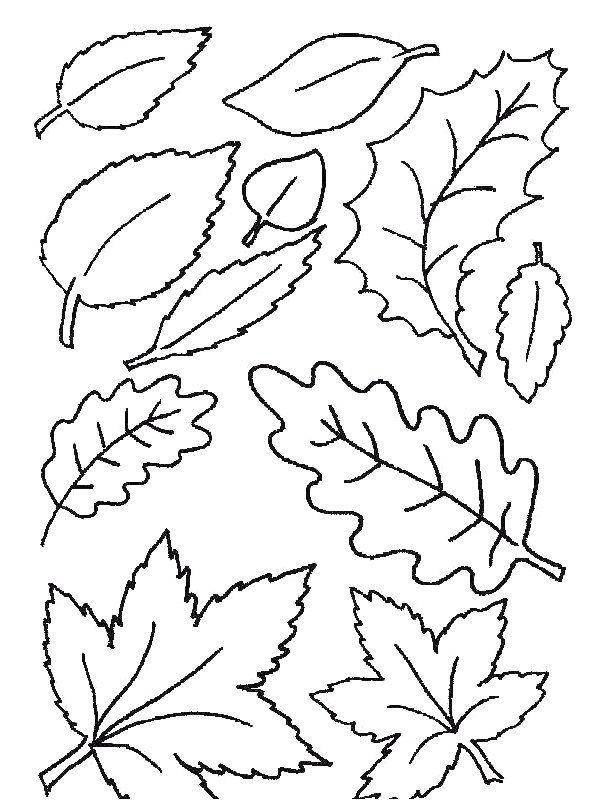 Kleurplaat Blaadjes Blaadjes Kolorowanki Leaf Coloring Page