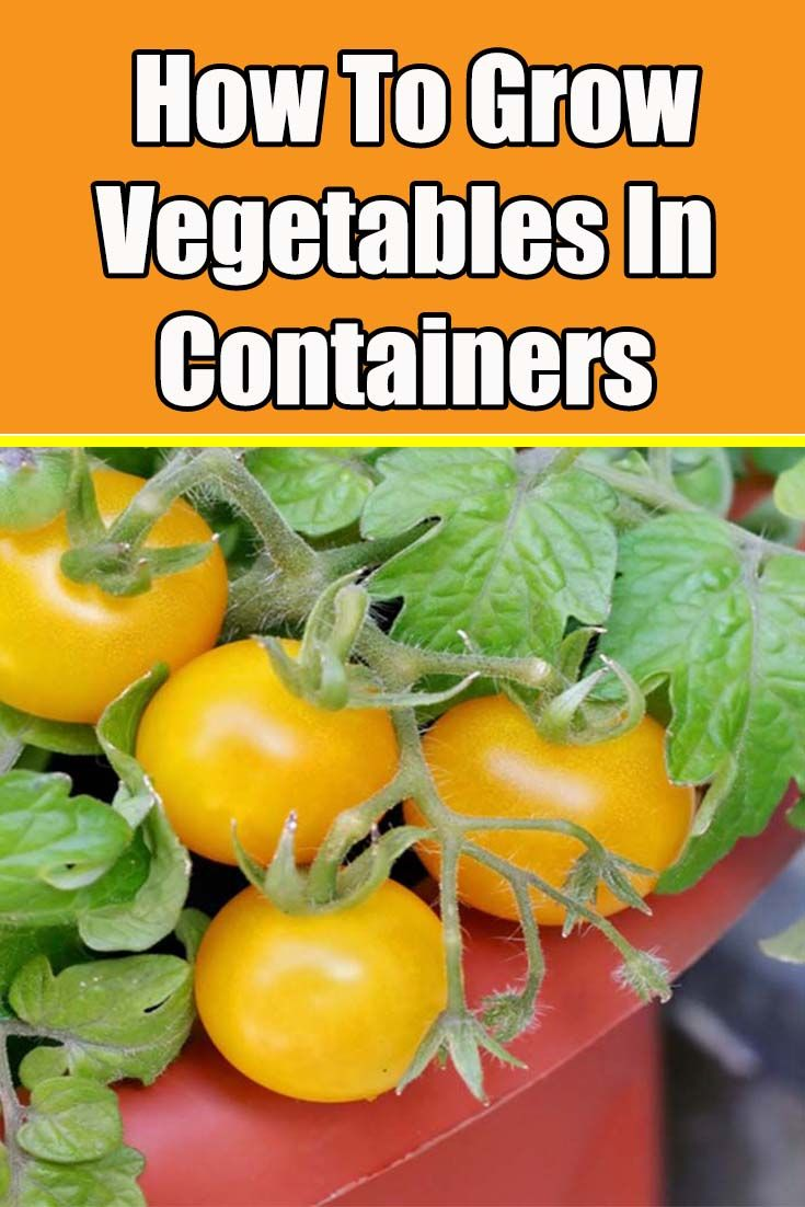 How To Grow Vegetables In Containers Growing Food In 640 x 480