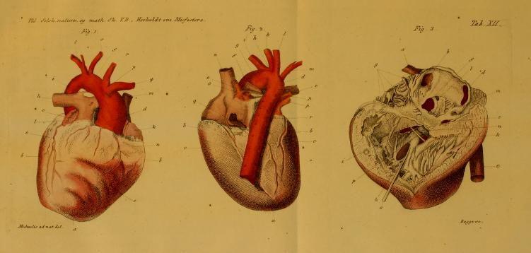 Det Kongelige Danske videnskabernes selskabs skrifter. Naturvidenskabelig og mathematisk afdeling, ser. 4, no. 5 (1832)