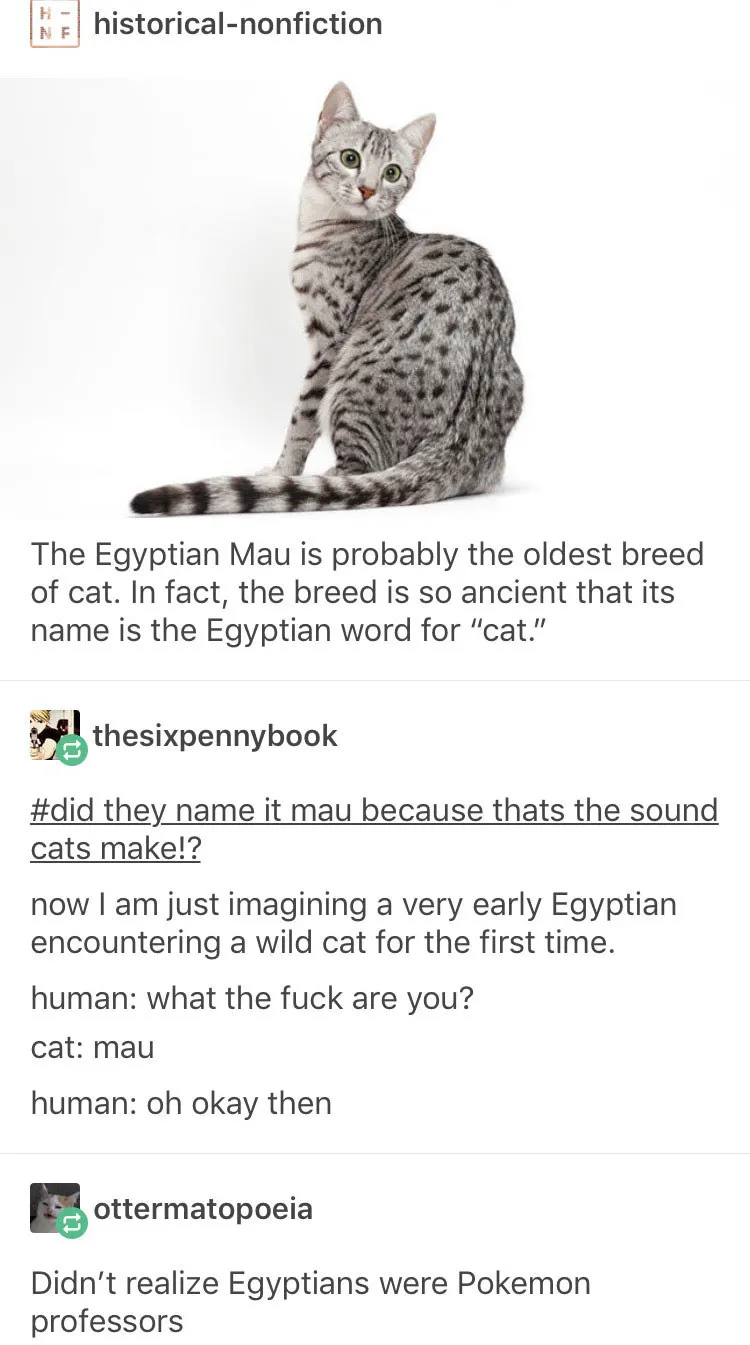 Photo of 21 Tumblr Posts About Cats That You Just MIGHT Not Have Actually Seen Yet