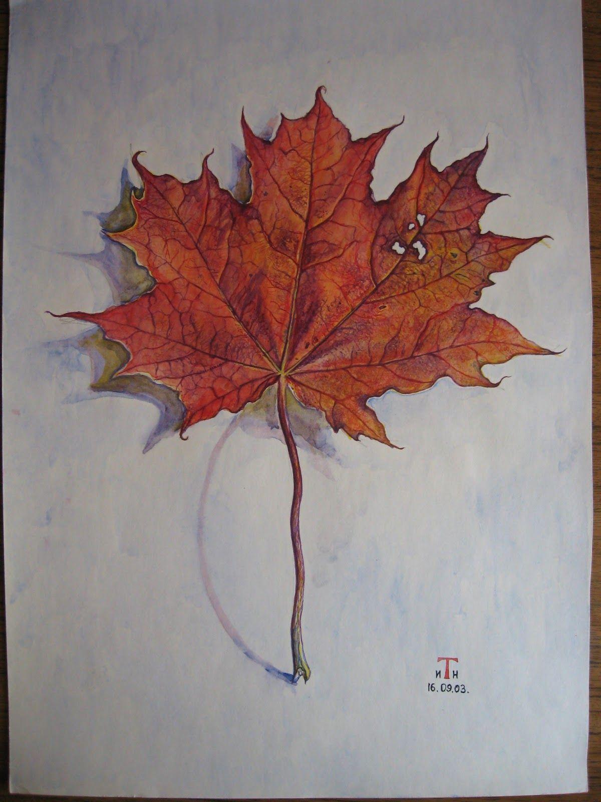 Осенние листья рисунок акварелью поэтапно