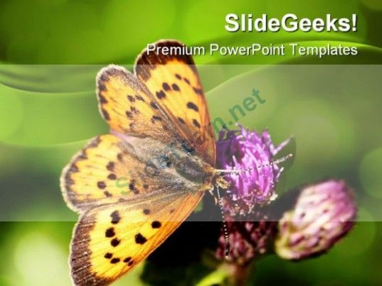 Butterfly Nature PowerPoint Templates And PowerPoint Backgrounds - nature powerpoint template