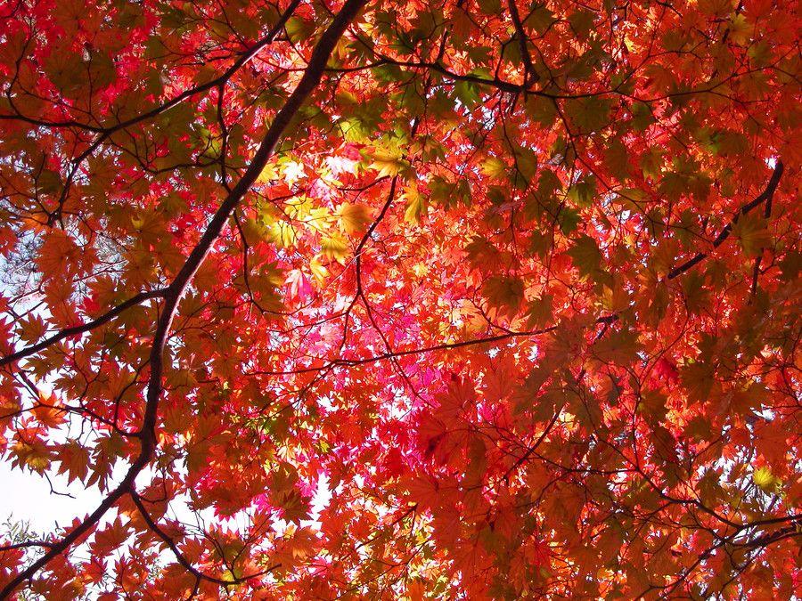 Autumn colors by kazumi Ishikawa on 500px