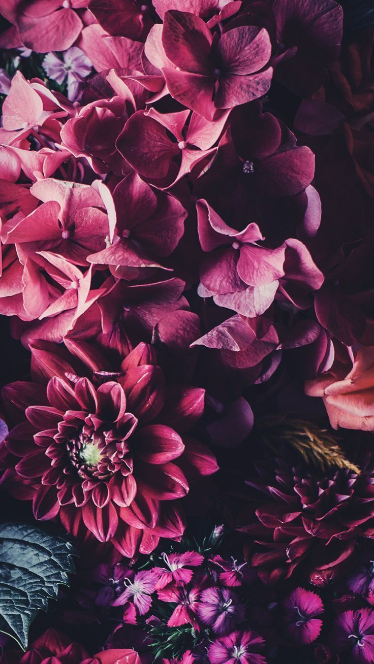5 floral iPhone wallpapers to celebrate 65000 Pinterest followers #iphonewallpaper
