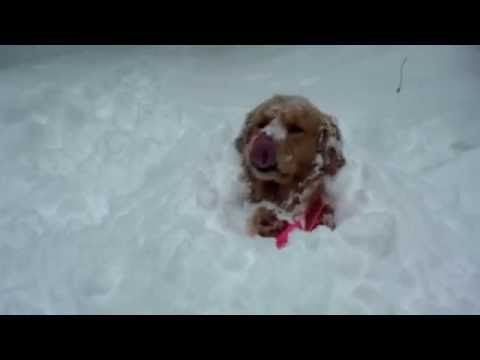 Dogs Discovering Snow Youtube Snow Dogs Dogs Funny Dogs