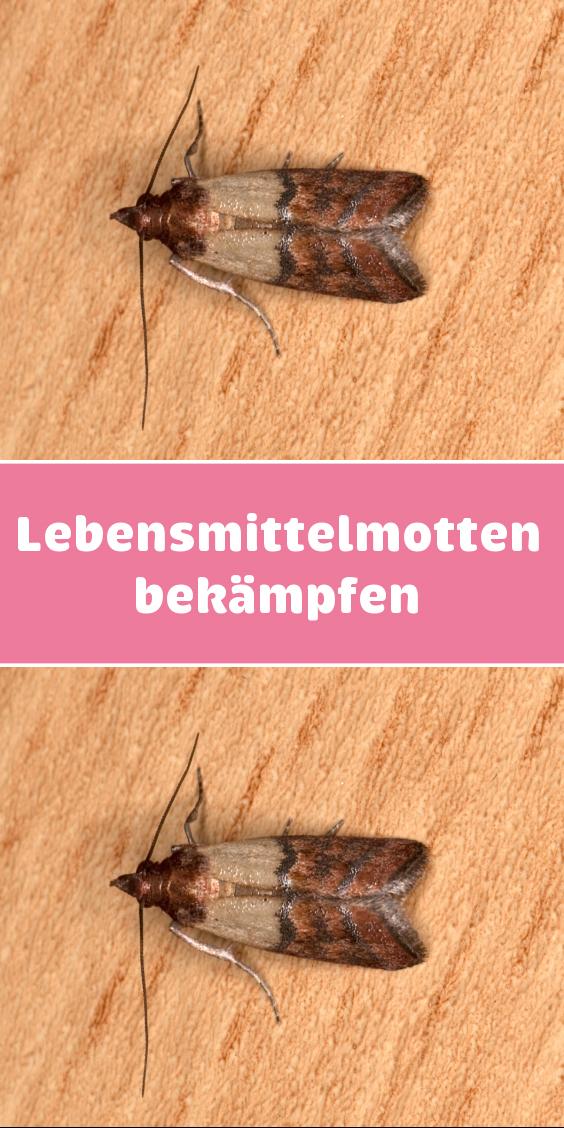 Motten Bekampfen Hausmittel Gegen Kleidermotten Kleidermotten Hausmittel Hausmittel Gegen Motten
