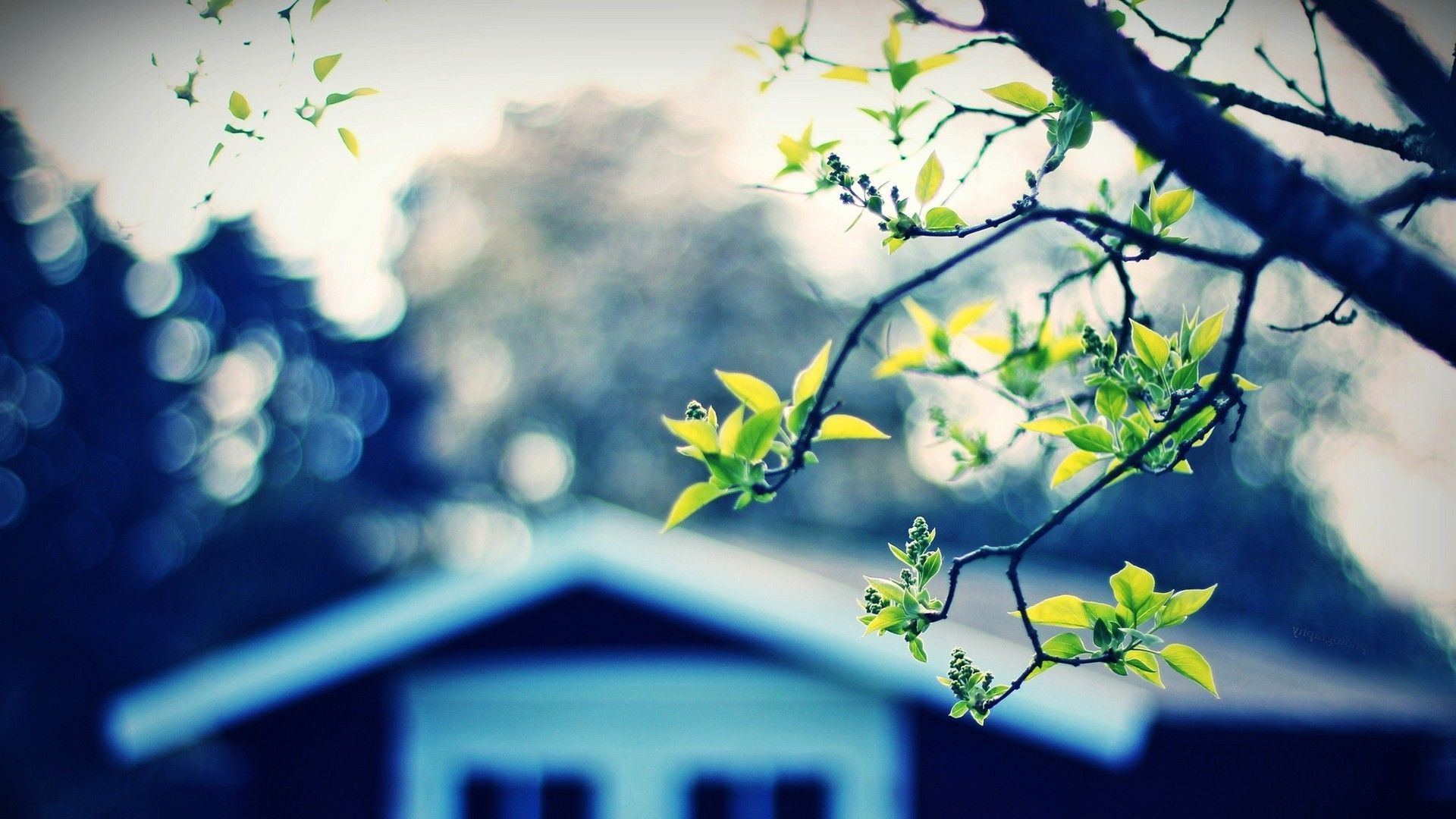 Tree And House Hd 1080p Wallpapers Download Nature Photography 1080p Wallpaper Wallpaper