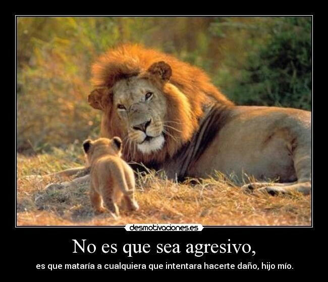 Pin by Kerry Cert on anger quote Animals, Big cats