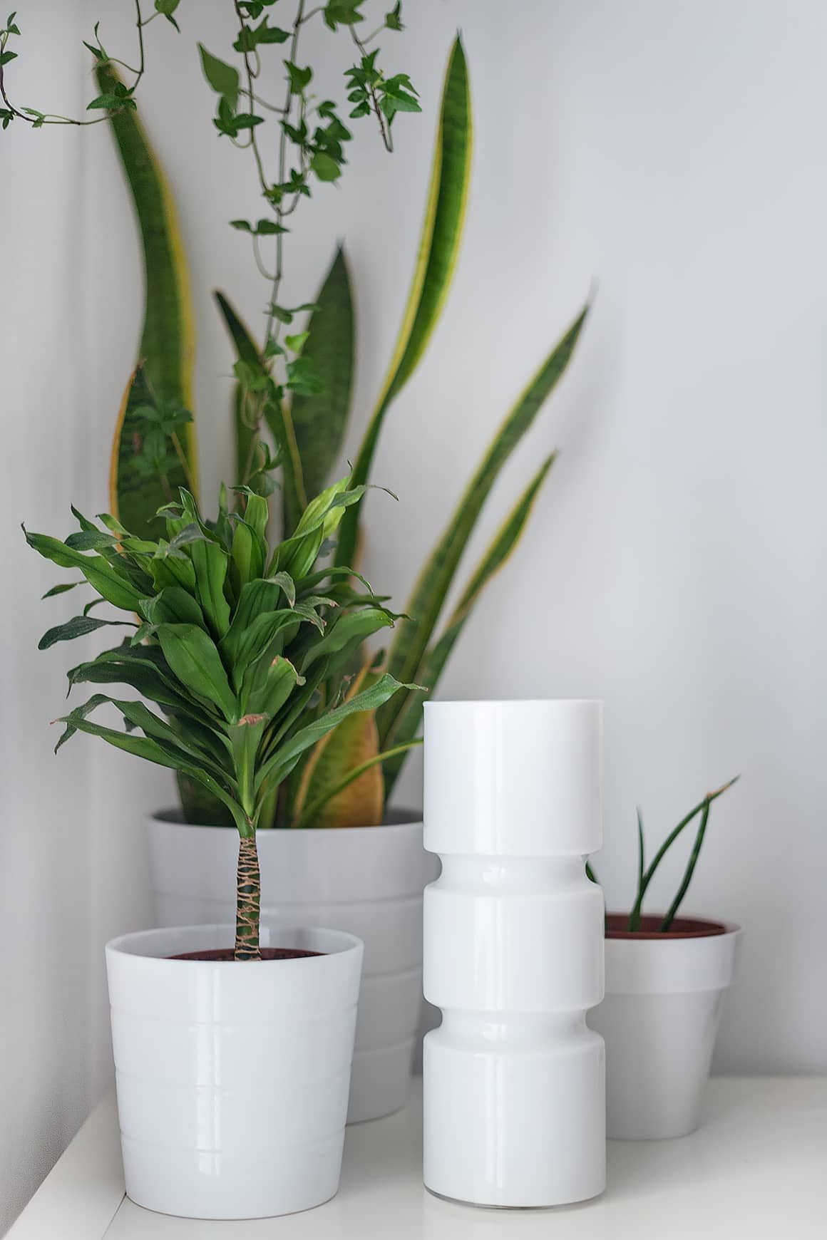 Do you really need a drainage hole in your plant pots