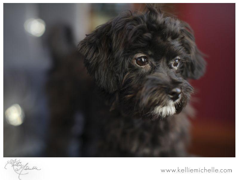 Kellie Michelle Blog: Puppy Love:Soft