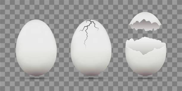 Best Cracked Egg Illustrations Royalty Free Vector Graphics Cracked Egg Illustration Free Vector Graphics