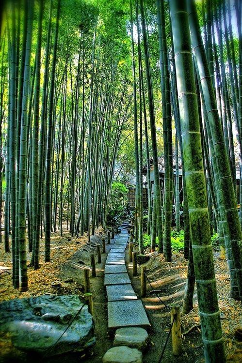 Bamboo Temple, Hokoku-ji, Kamakura, Kanagawa, Japan༺ ♠ ŦƶȠ ♠ ༻
