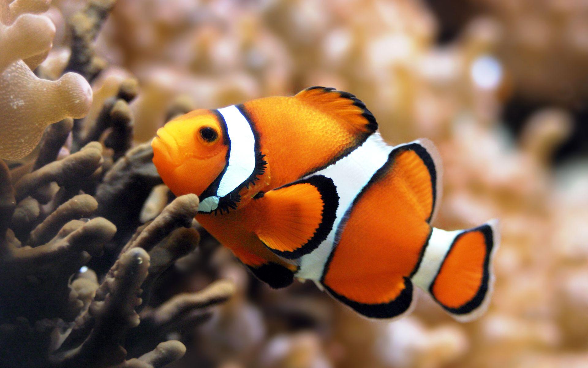 Fish HD Wallpaper by Infoway LLC - Website Development Company ...